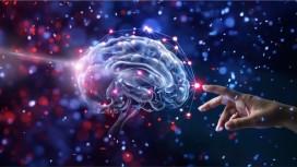 Understanding the Nervous System Hollistically