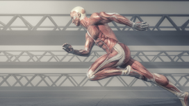 Anatomy of Movement - Certified REPs Course
