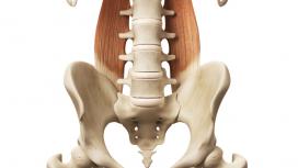 Anatomy of the Pelvis & Spine