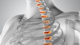 Spinal Anatomy & Rehab